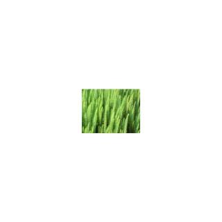 La Pesse d'eau godet 9x9 cm 860378