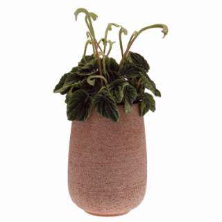 Pot Basic haut, ø12 X H21 cm, 2.5 L 485121