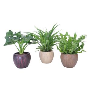 plantes vertes avec cache pot plantes vertes maison botanic. Black Bedroom Furniture Sets. Home Design Ideas