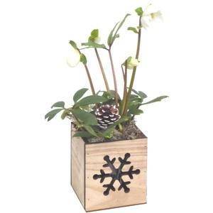 Rose de Noël Pot déco carré rouge. Le pot 497886