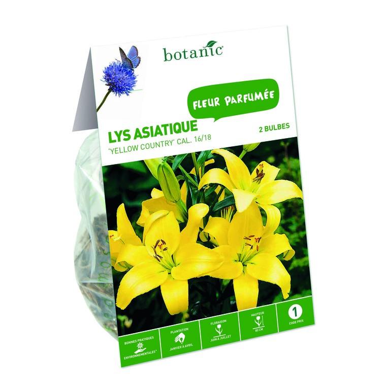 Lys asiatique jaune 2 bulbes de calibre 16 à 18 – 1 m 402787