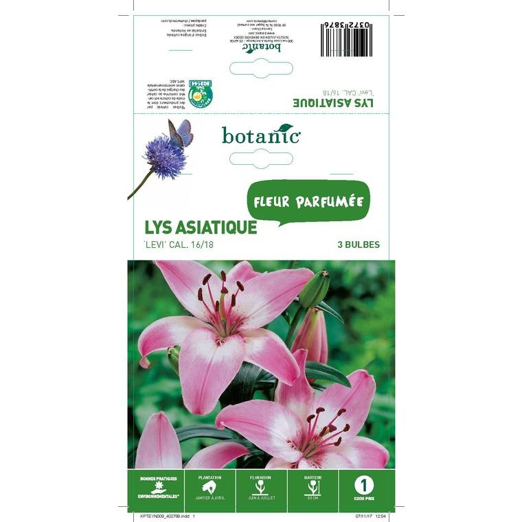 Lys asiatique violet 3 bulbes de calibre 16 à 18 – 1 m 402789