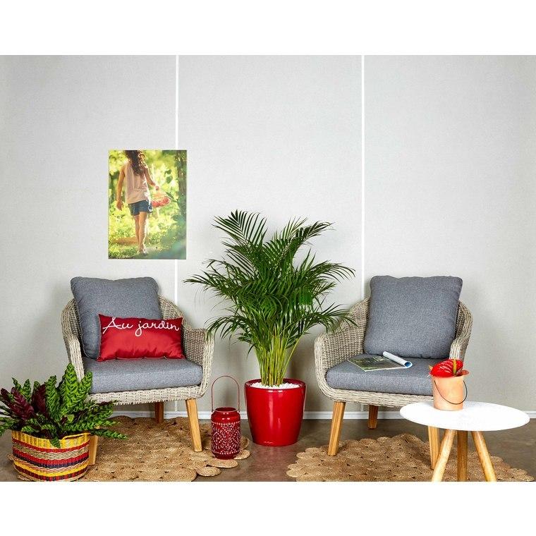 Areca lutescens et son pot Classico premium Ø 35 rouge 405286