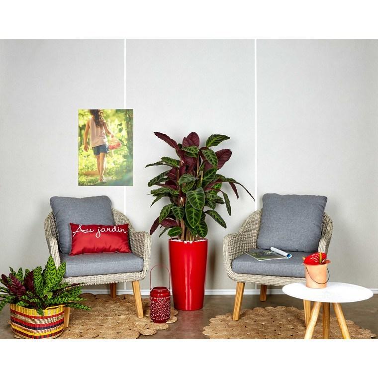Calathea warscewiczii et son pot Rondo premium Ø 32 rouge 405292