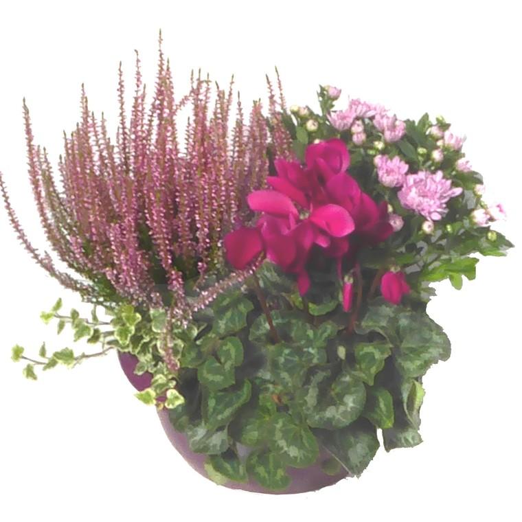 composition d'extérieur mélange violet rose. La coupe de 30 cm 414742