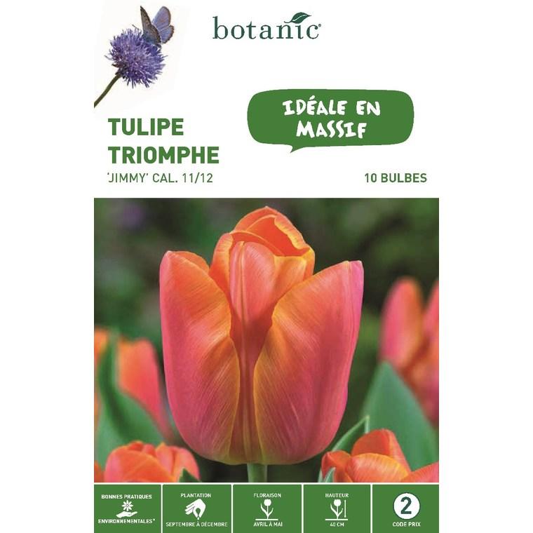 Tulipe triomphe Jimmy orange botanic® - 10 bulbes 414768