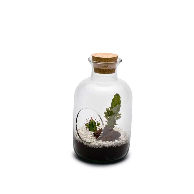 Terrarium Wayane S en verre transparent avec bouchon en liège Ø 14 cm 414939