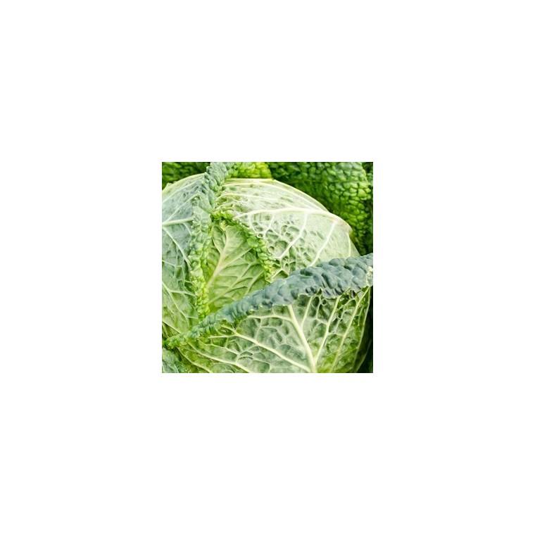 Chou Frise. La barquette de 6 plants 423159