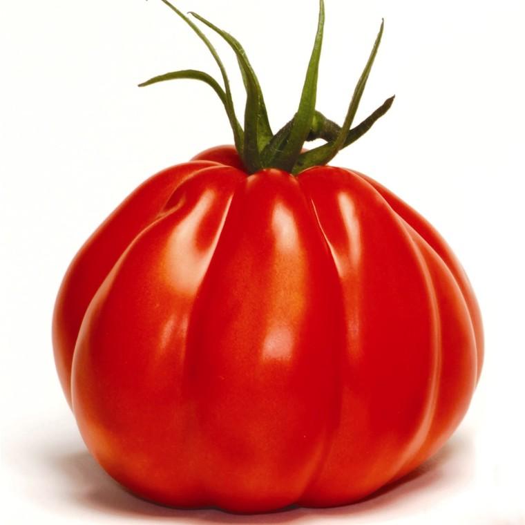 Tomate côtelée Corazon Greffée. Le pot de 1 litre