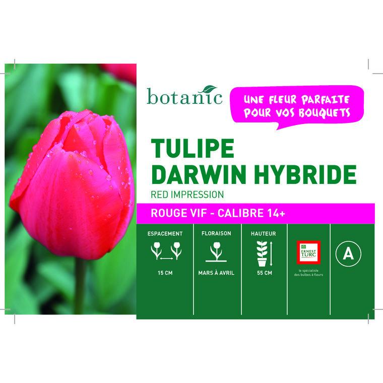 Bulbe tulipe darwin hybride red impression botanic® en vrac 431250