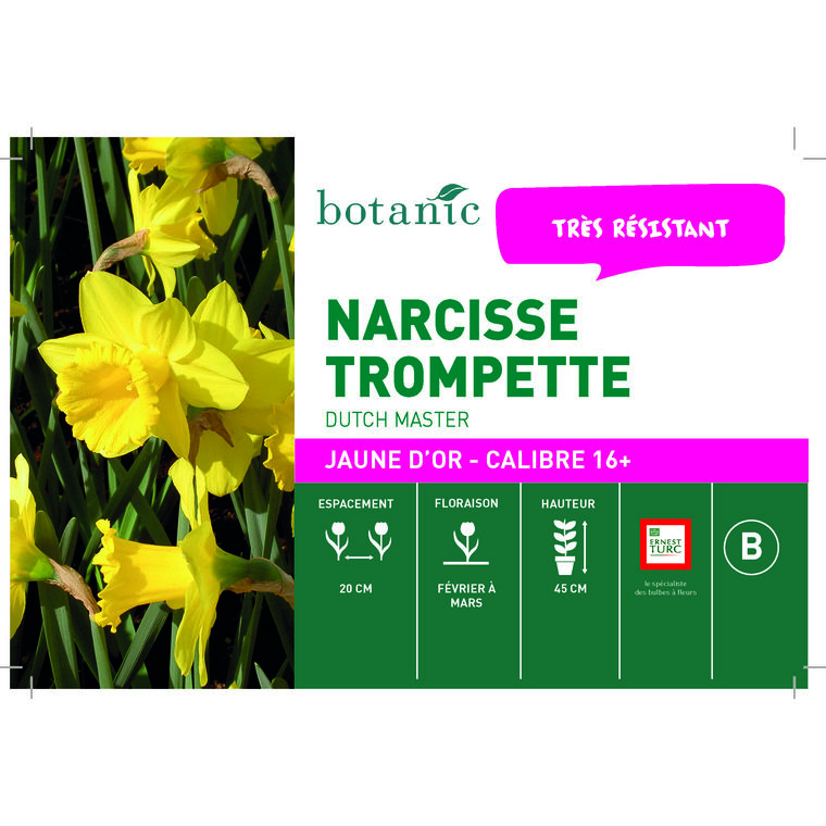 Bulbe narcisse trompette dutch master jaune botanic® en vrac 431262