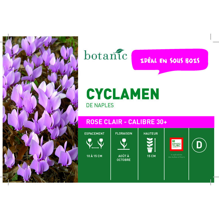 Bulbe cyclamen de Naples rose botanic® en vrac 431269