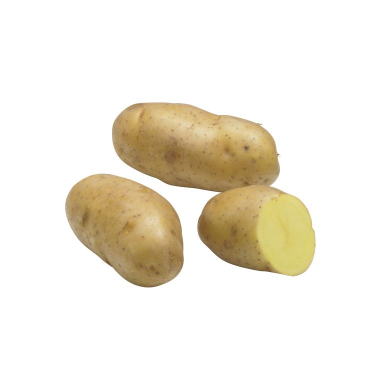 Pommes de terre Pompadour calibre 25/32, 25 plants 436827
