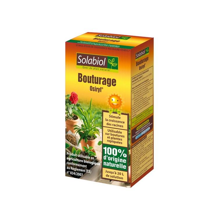 Bouturage Osyril® 438273