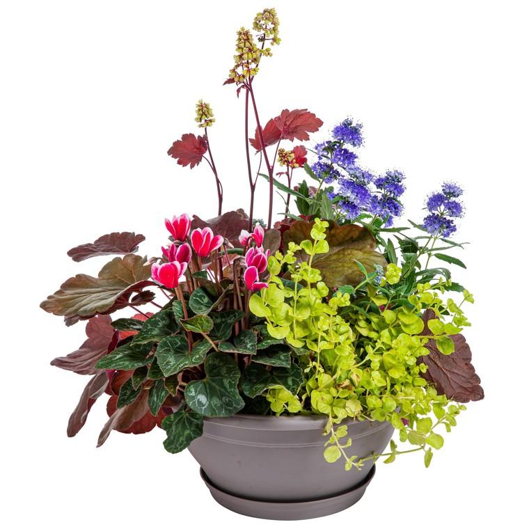 Composition de plantes vivaces. La coupe de 25 cm 440318