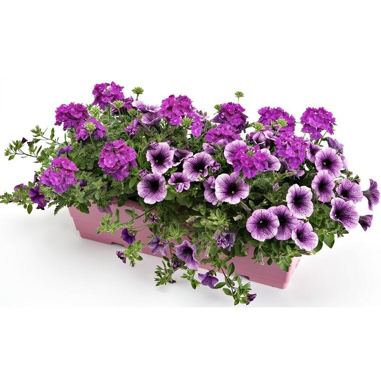 Jardinière anglaise. La jardinière de 50 cm