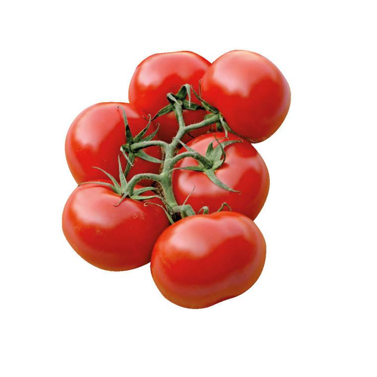Tomate ronde en grappe Giolice bio. Le pot compostable de 10.5 cm 447480