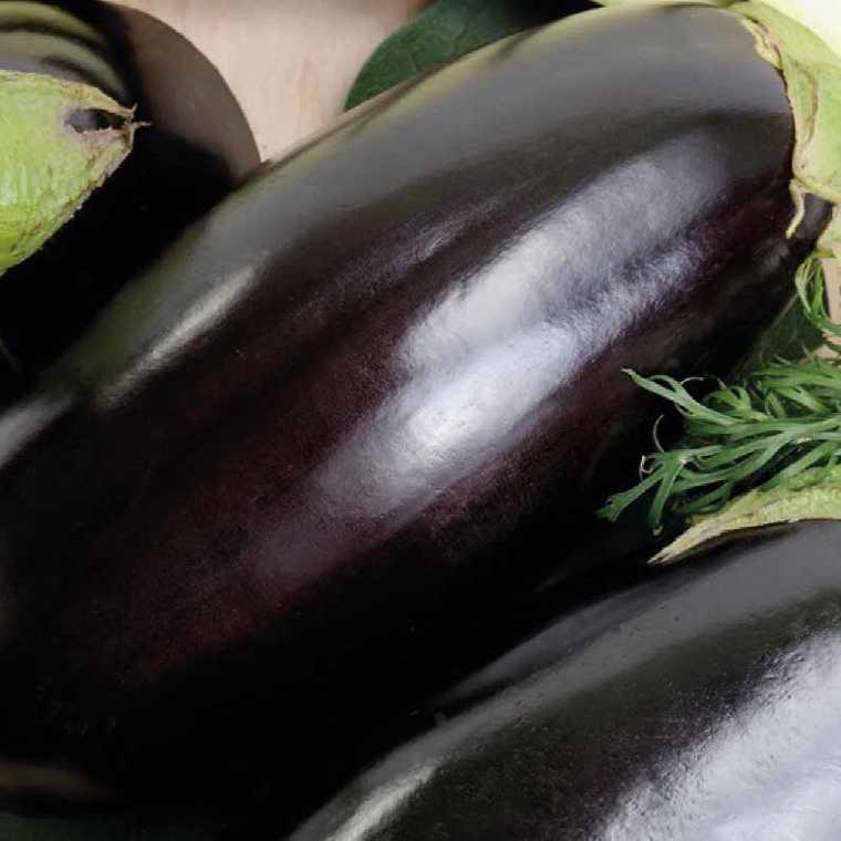 Aubergine Longue Baluroi bio. Le pot compostable de 10.5 cm 447488