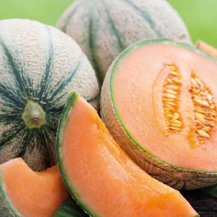 Melon Brodé Charentais Jenga. Le pot compostable de 10,5 cm 447498