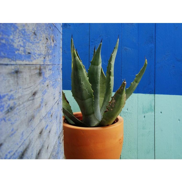 Pot Cactus en terre cuite H 47 x Ø 44 449444