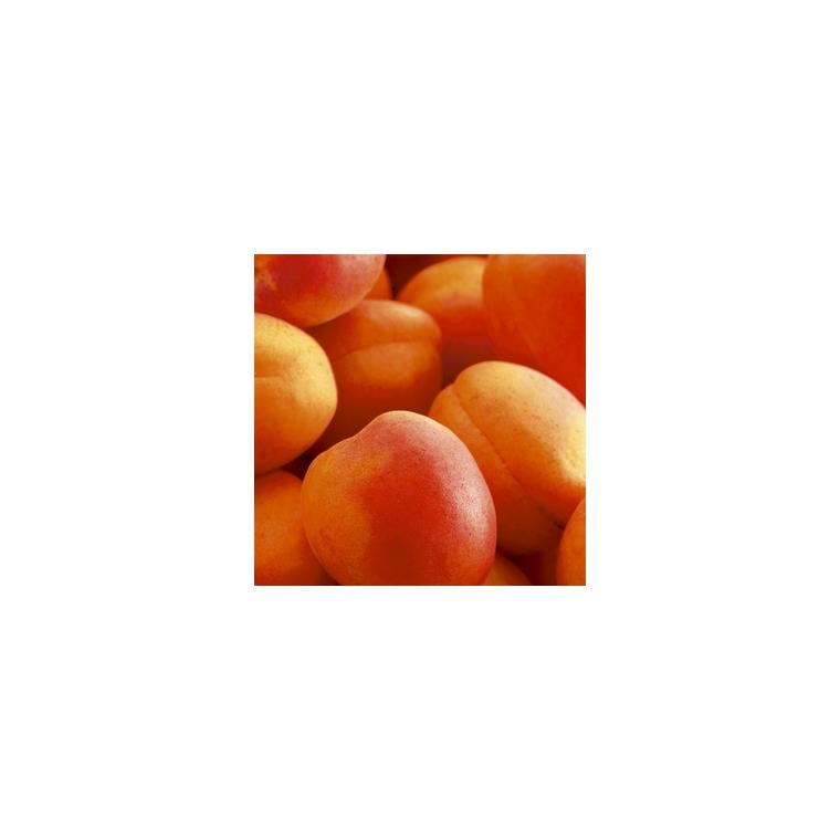Abricotier Rouge Tardif Delbard ®Delmast. Le pot de 12 litres, forme gobelet 45085