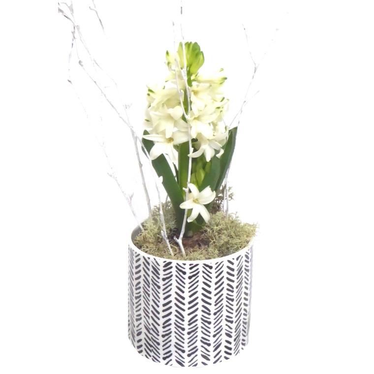 Jacinthe céramique blanche et noire. La composition 450928