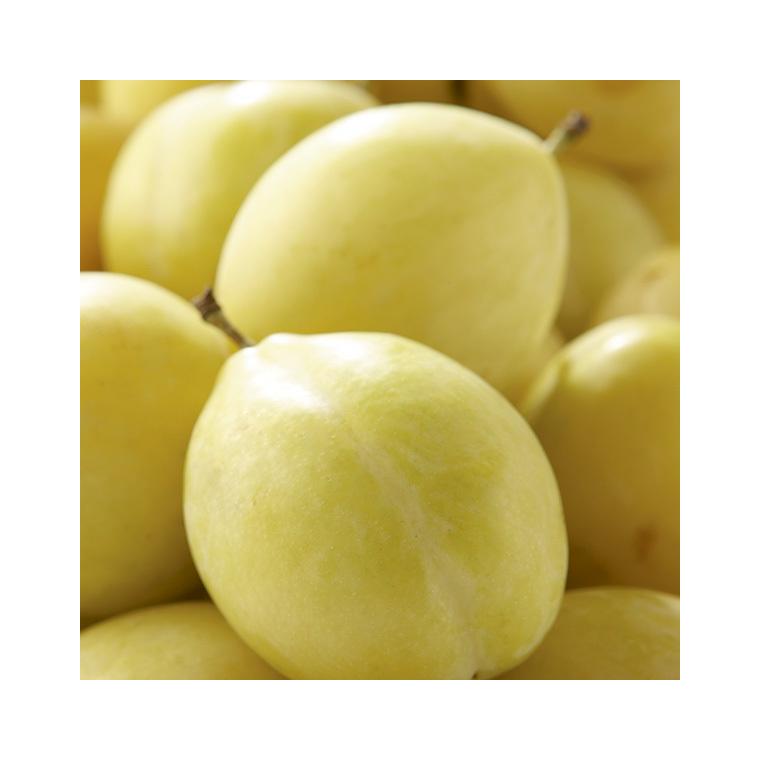 Prunier Miraclaude ® Delclomi. Le pot de 12 litres, forme gobelet 45125