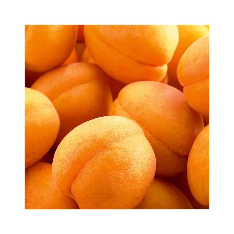 Abricotier Rustique Des Pyrenees ® Bourqui. Le pot de 15 litres, forme 1/2 tige 45134