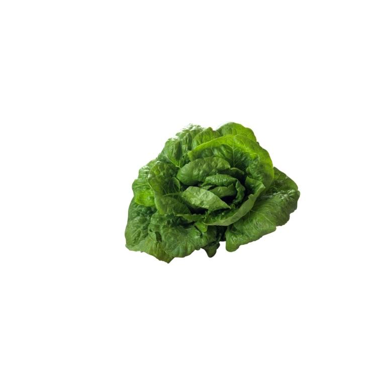 Salade romaine bio de France - Prix à la pièce 456348