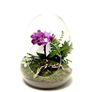 Terrarium dyno phalaenopsis de taille M Ø 20 x h 25 cm 523567
