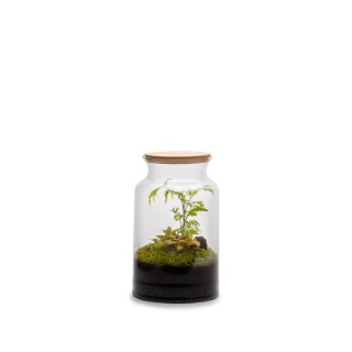 Terrarium autonome Jungle, Ø25 X H40 cm 524039