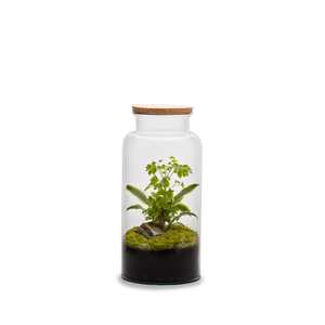 Terrarium autonome Jungle, Ø24 X H30 cm 524040