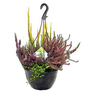 Erica mélangées multicolore en suspension Ø 25 cm 525970