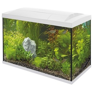 Aquarium Start 70 Tropical Kit Blanc 58x30x45 cm 529266