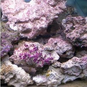 Aquaroche de culture 52971
