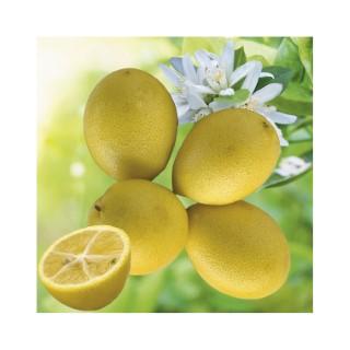 Limequat Bio botanic® 534000