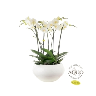 Composition d'orchidées premium botanic® - Pot Ø47 cm 534391