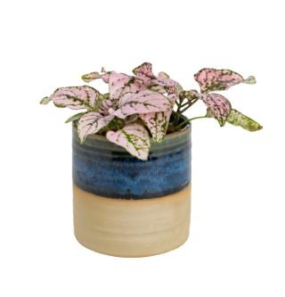 Plante verte ou fleurie avec cache-pot magnétique Ø 6 cm 55119