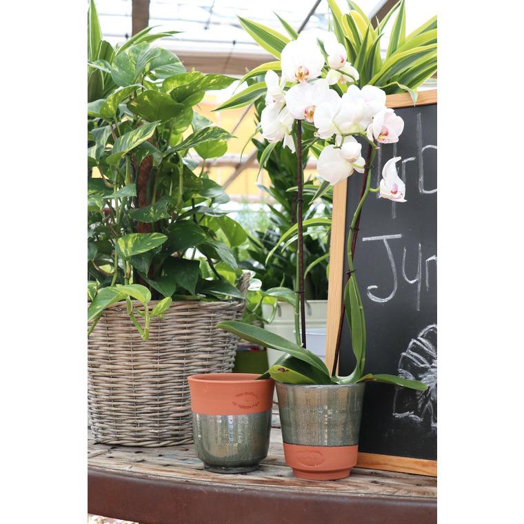 Cache potot Orchidées Ø 16 x H 15 cm 507438