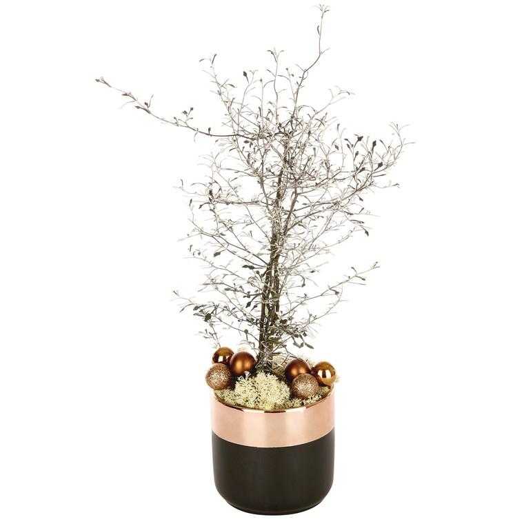 Corokia en pot noir et cuivre. La composition 517927
