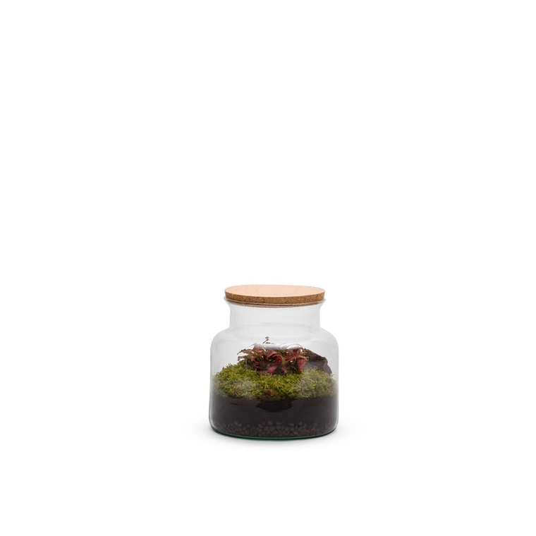 Terrarium jungle Bulle de Nature taille S Ø 23 x h 20 cm 524038