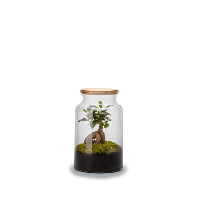 Terrarium jungle avec ginseng Bulle de Nature taille M Ø 21 x h 30 cm 524043