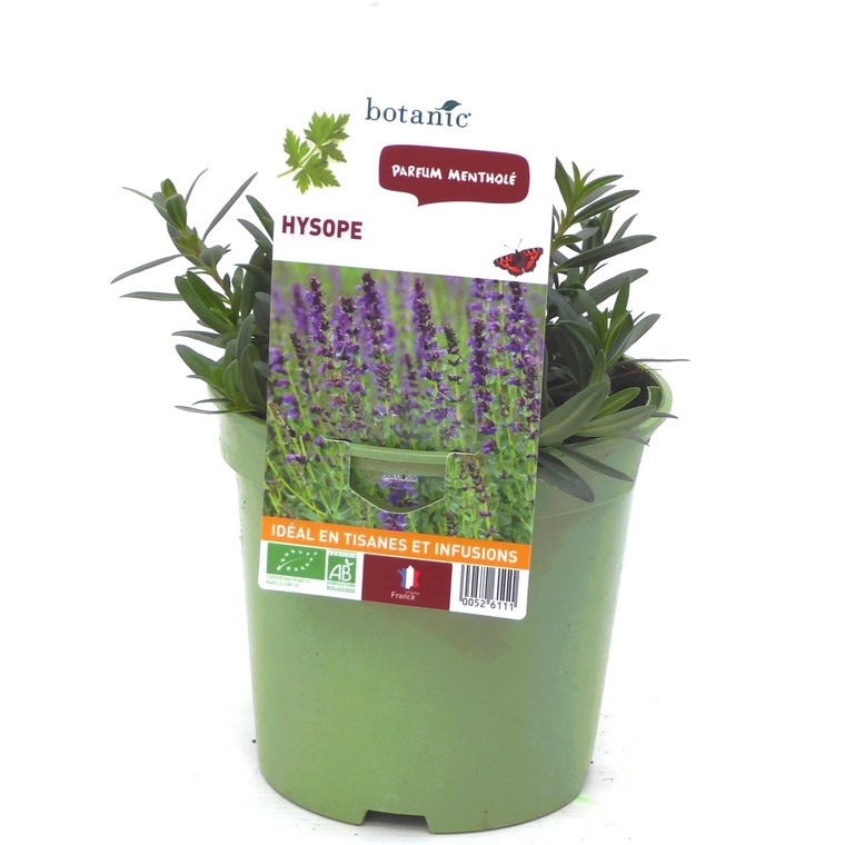 Hysope. Le pot de 1 litre recyclé 52611