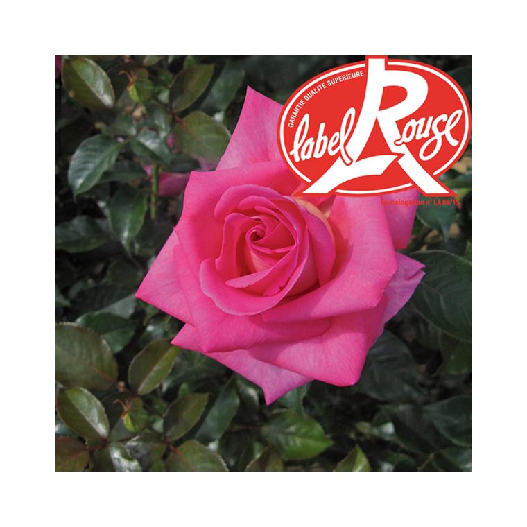 Rosier Parfum Royal® Label Rouge en pot de 5L 534294