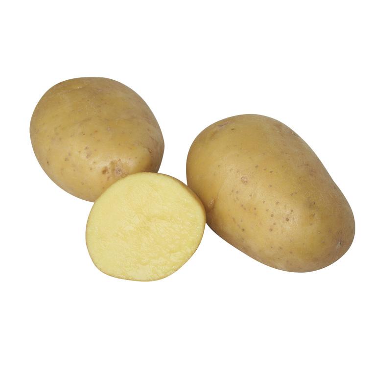 Plants de pomme de terre Maïwen bio par 25 534371