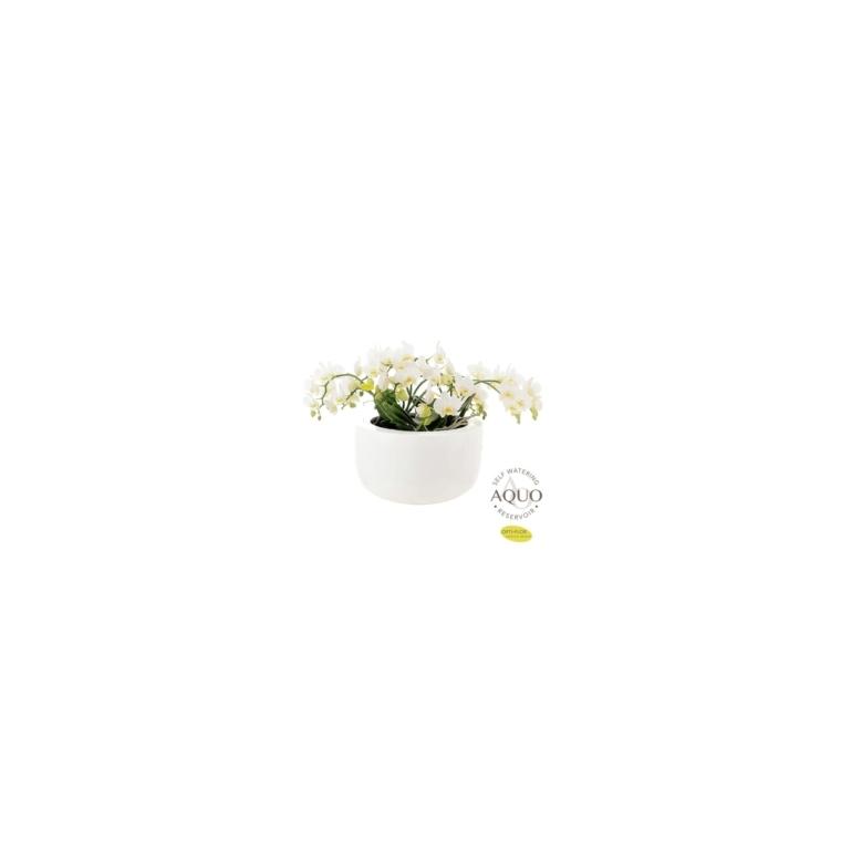 Composition d'orchidées retombantes premium blanche botanic® - Pot Ø33 cm 534378