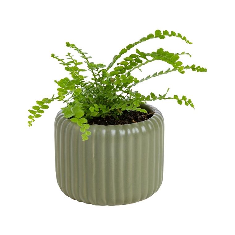 Plante verte ou fleurie avec cache-pot magnétique Ø 6cm 55119