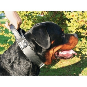Collier chien double intervention 50mm / 85cm