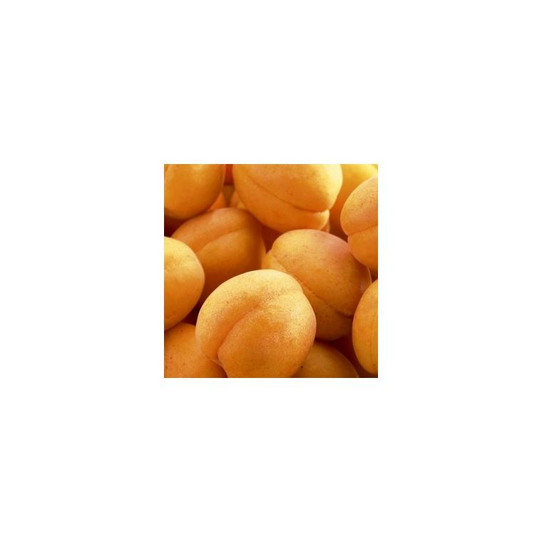 Abricotier Rustique Des Pyrenees ®Bourqui forme 1/2 tige 59733