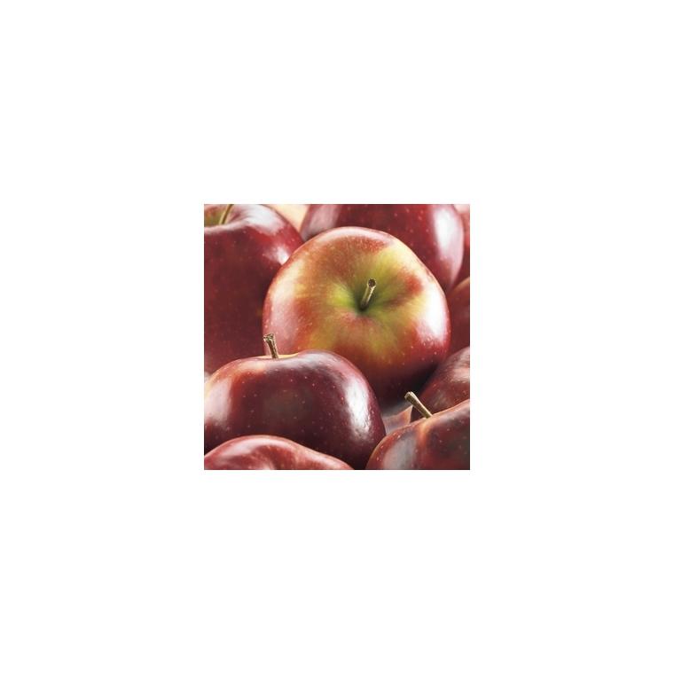 Pommier Delbard Celeste ®Deltana forme gobelet 59761
